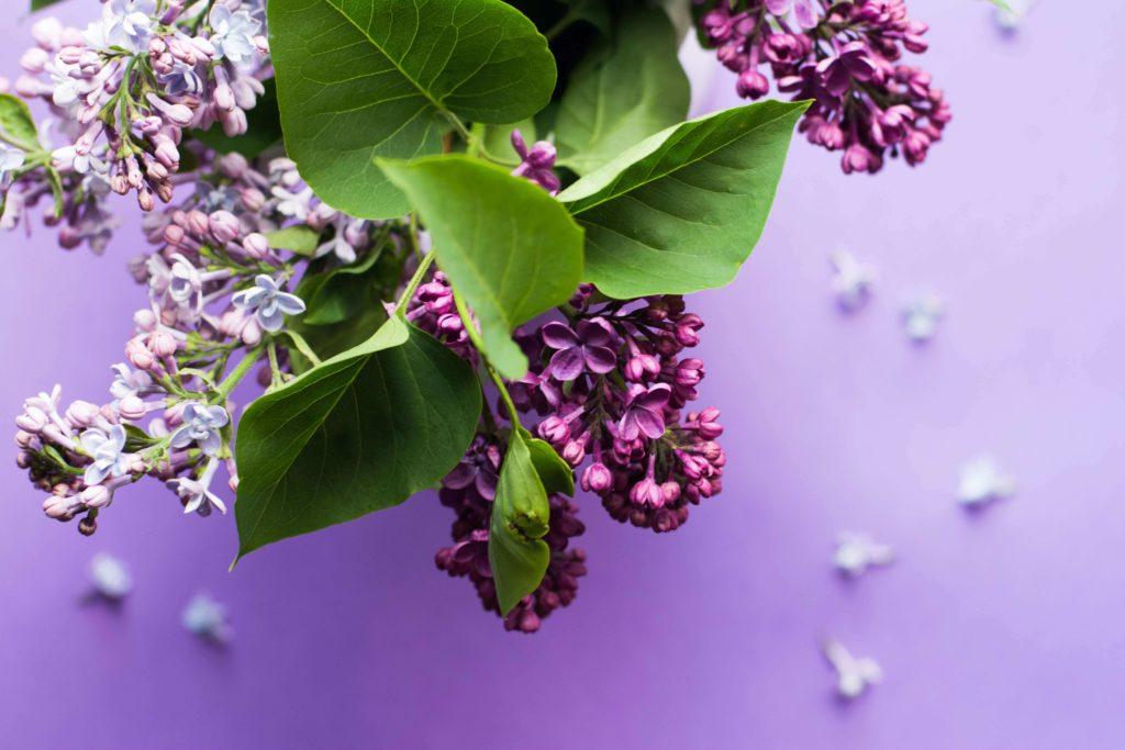紫のキレイな花